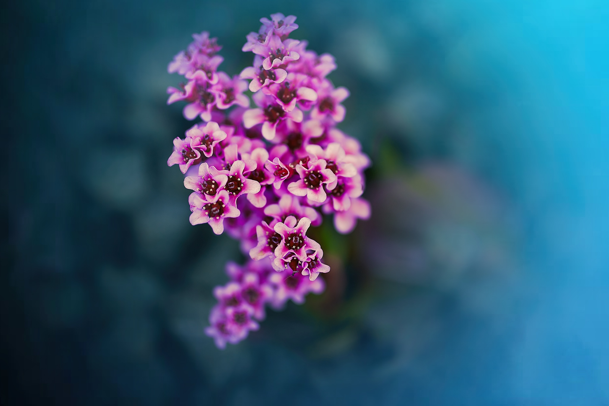 Photo in Nature #flower #flowers #floral #plant #garden #nature #natural #detail #dof #macro #close #pink #purple