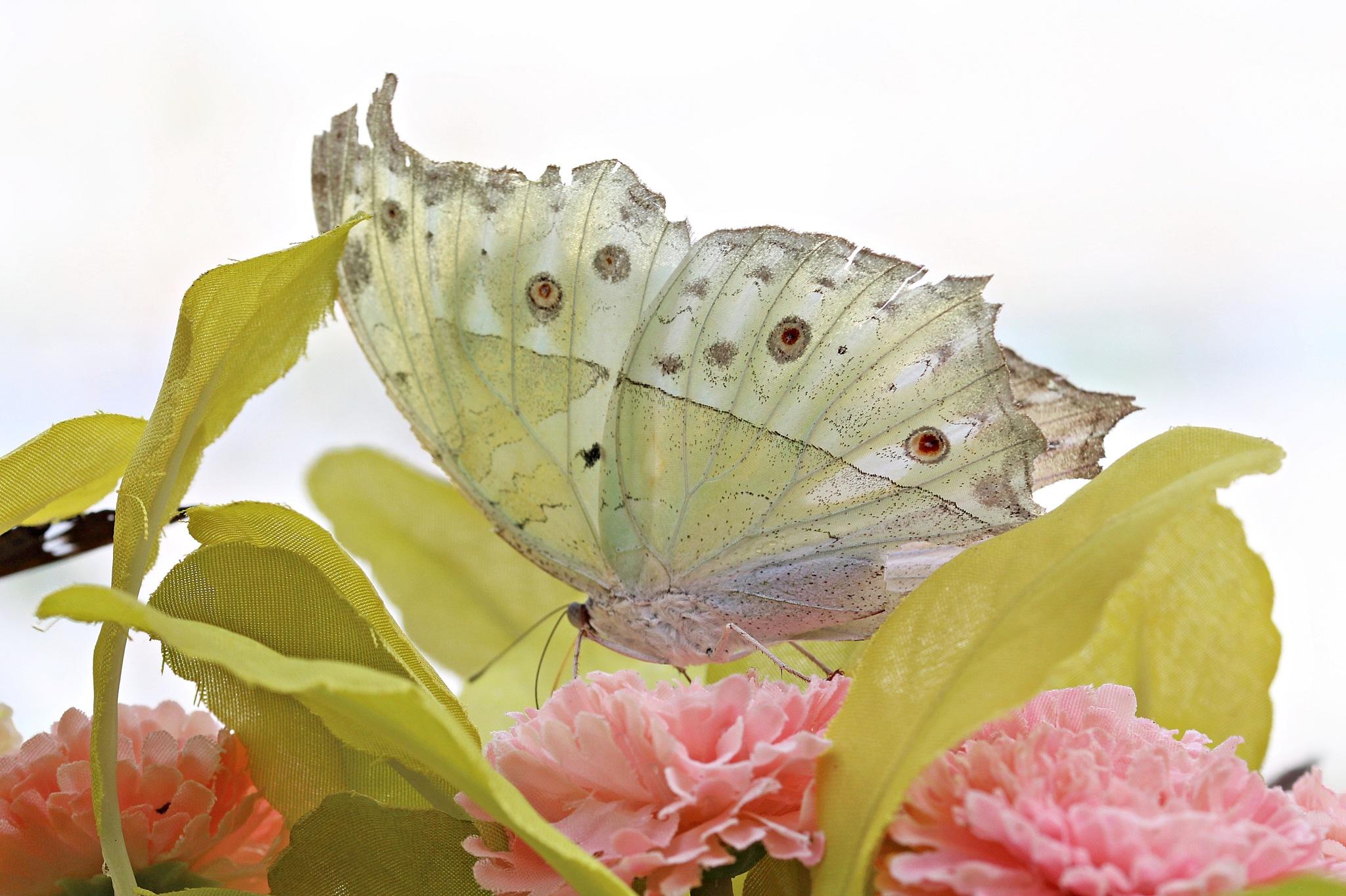 Butterfly light by Giuseppe Criseo