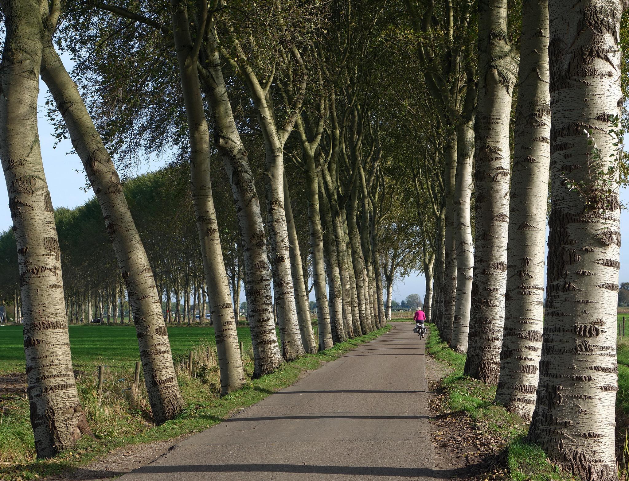 Beautiful trees in Bunnik by zwedendejong