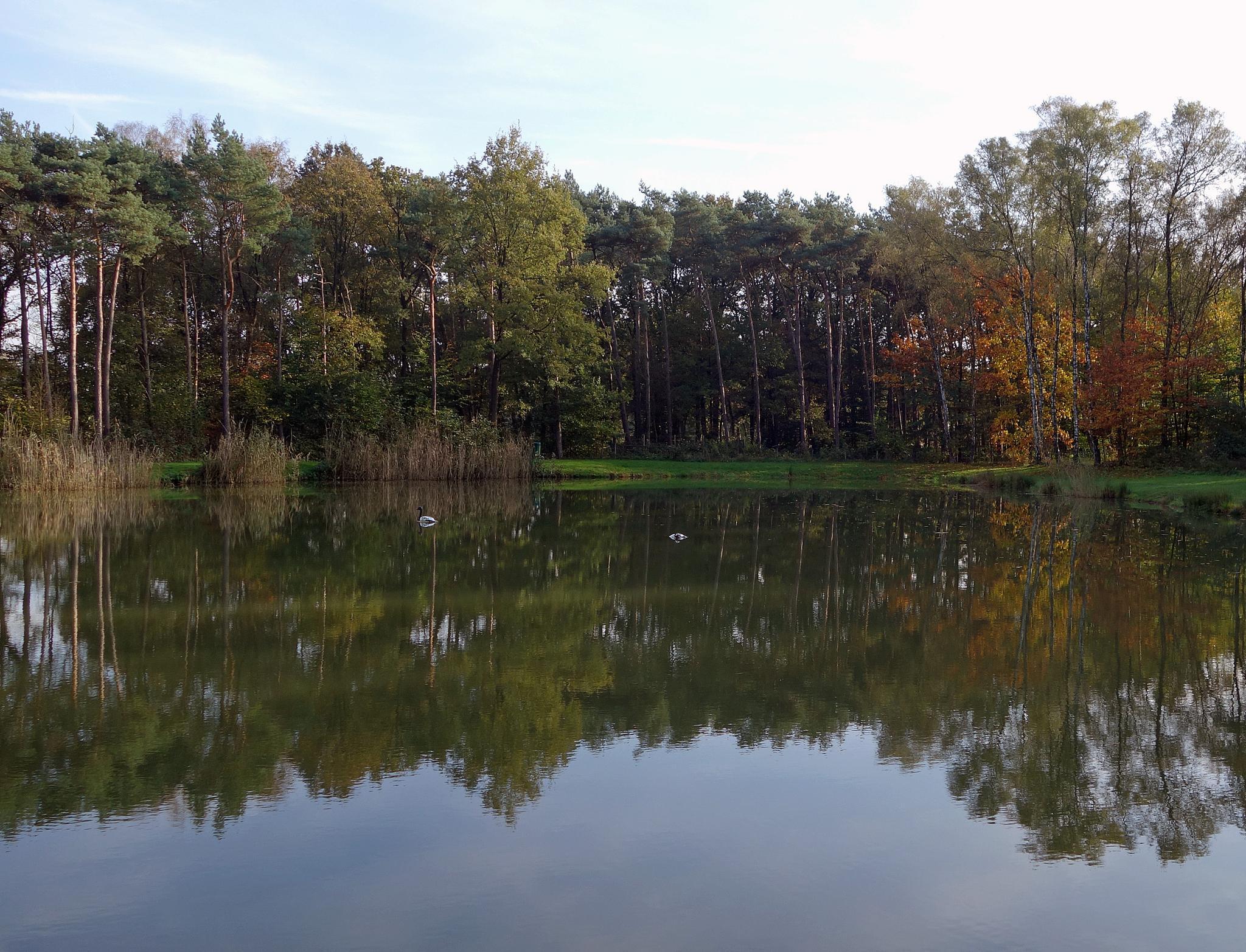 Reflection in Winterswijk by zwedendejong