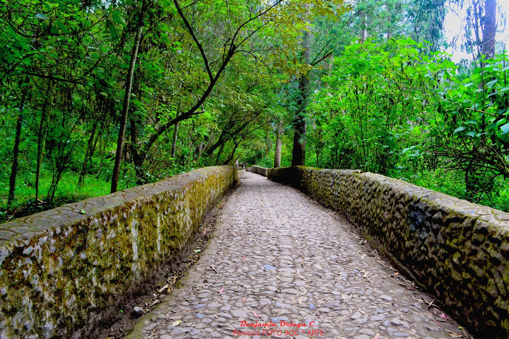 """""""""""Camino hacia la Cascada EL PITA"""""""" by Proyecto FOTO BOC *ARTE"""