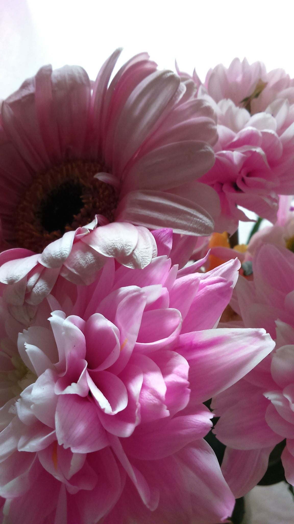 Pink contours with pistils III by MEANMAGENTA_PHOTOGRAPHY
