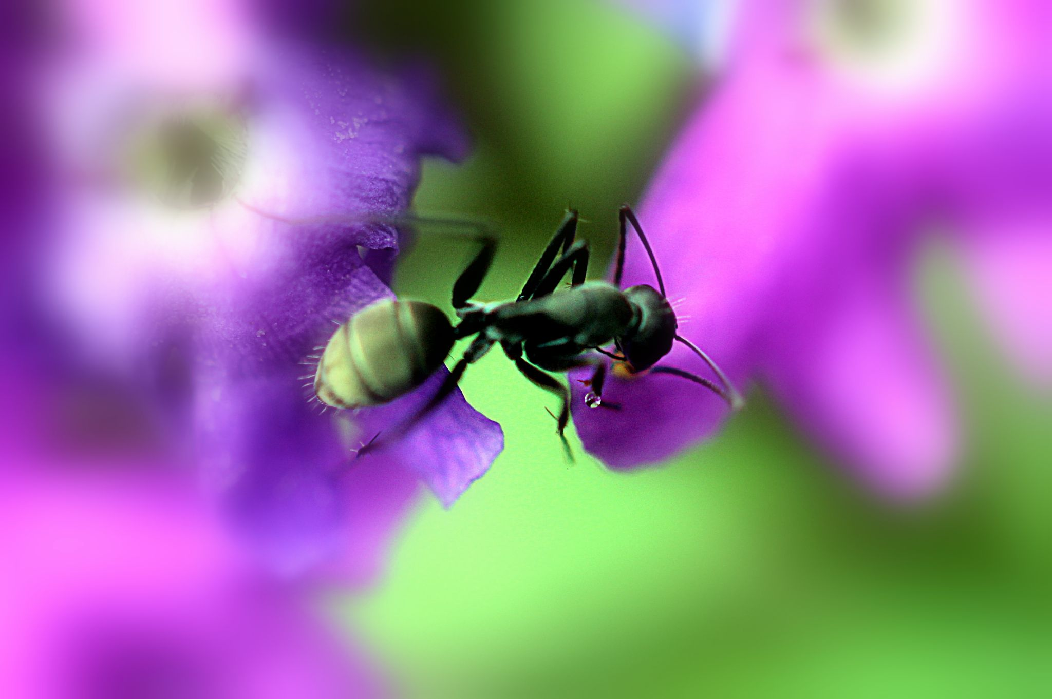 Ant in Colour by Christo Smith