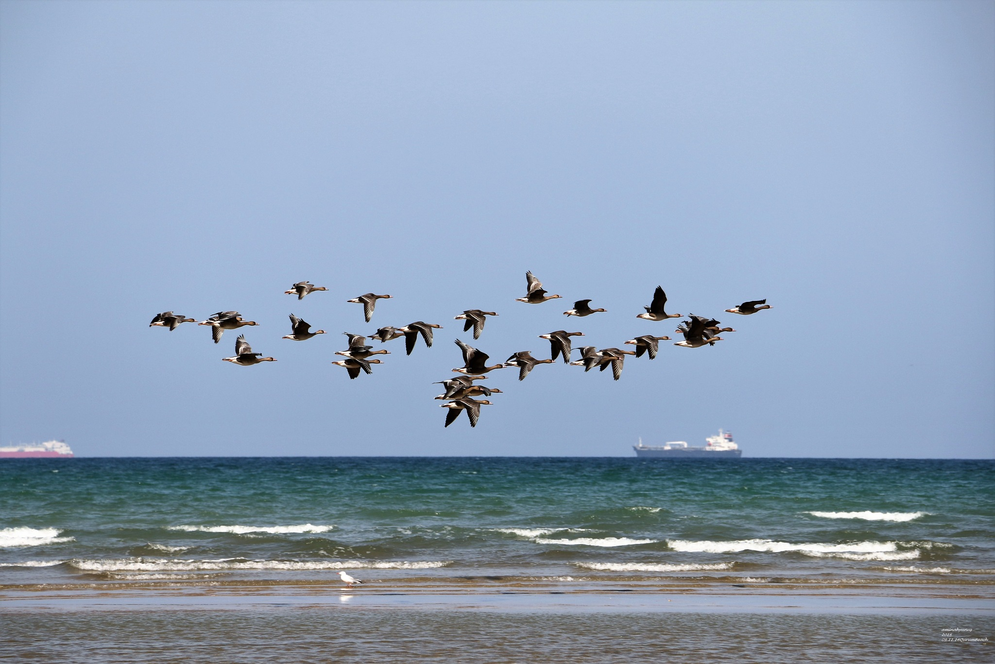 cruising the ocean by Aminah Yunus