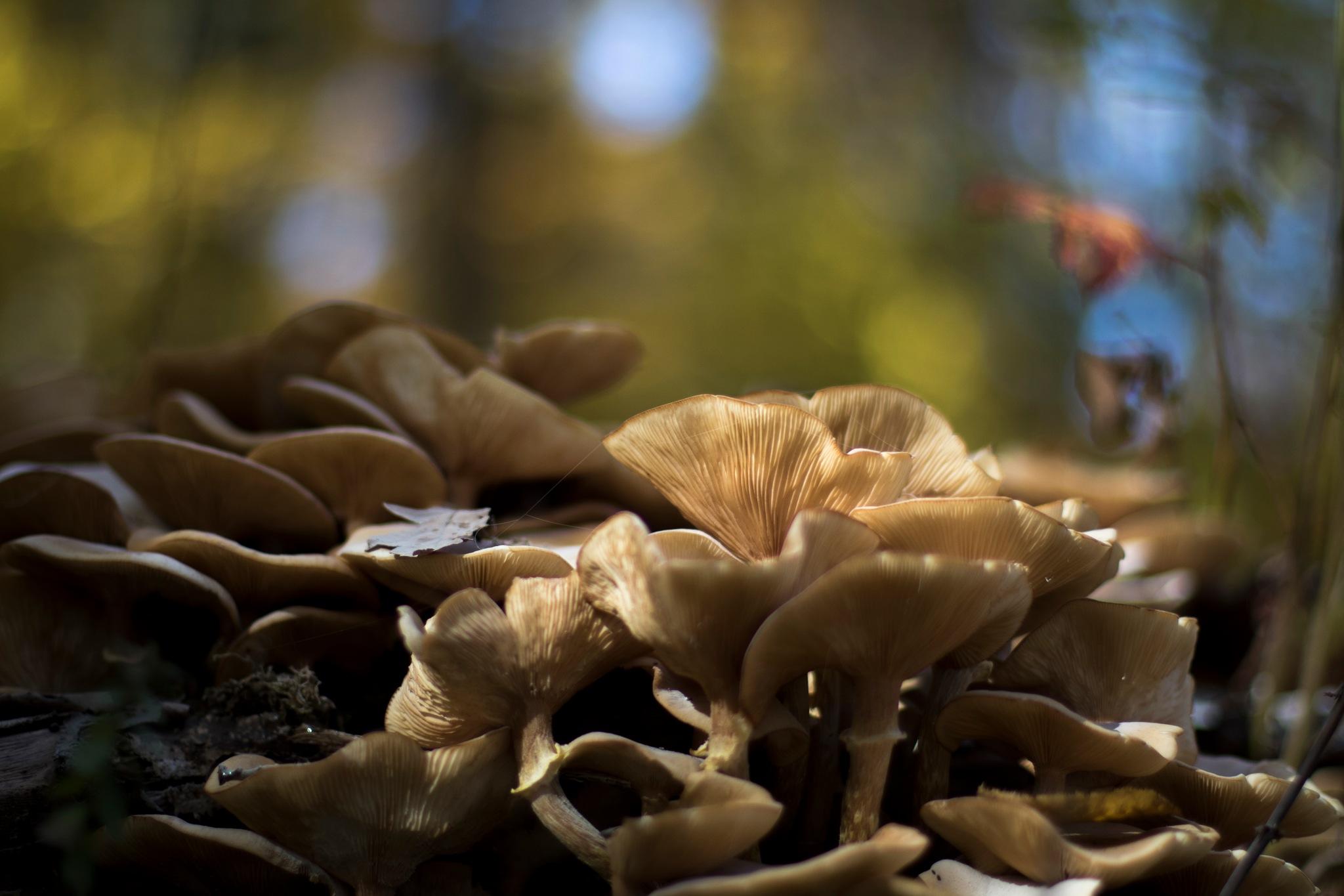 mushrooms by Tamás Hajdú
