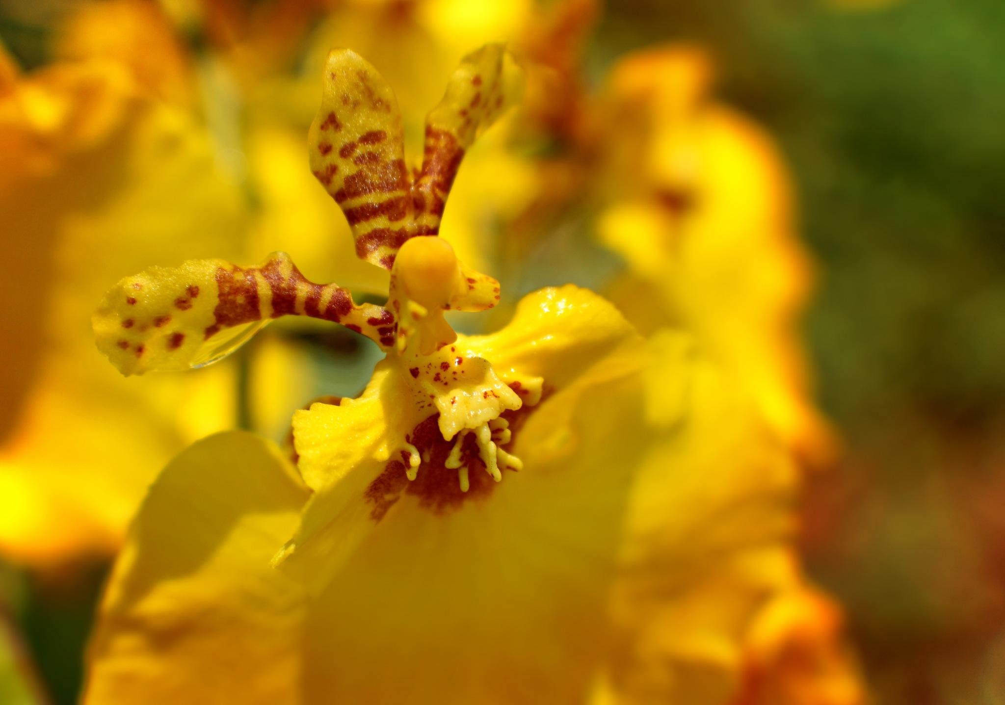 Mini orquídea. by Sirlei