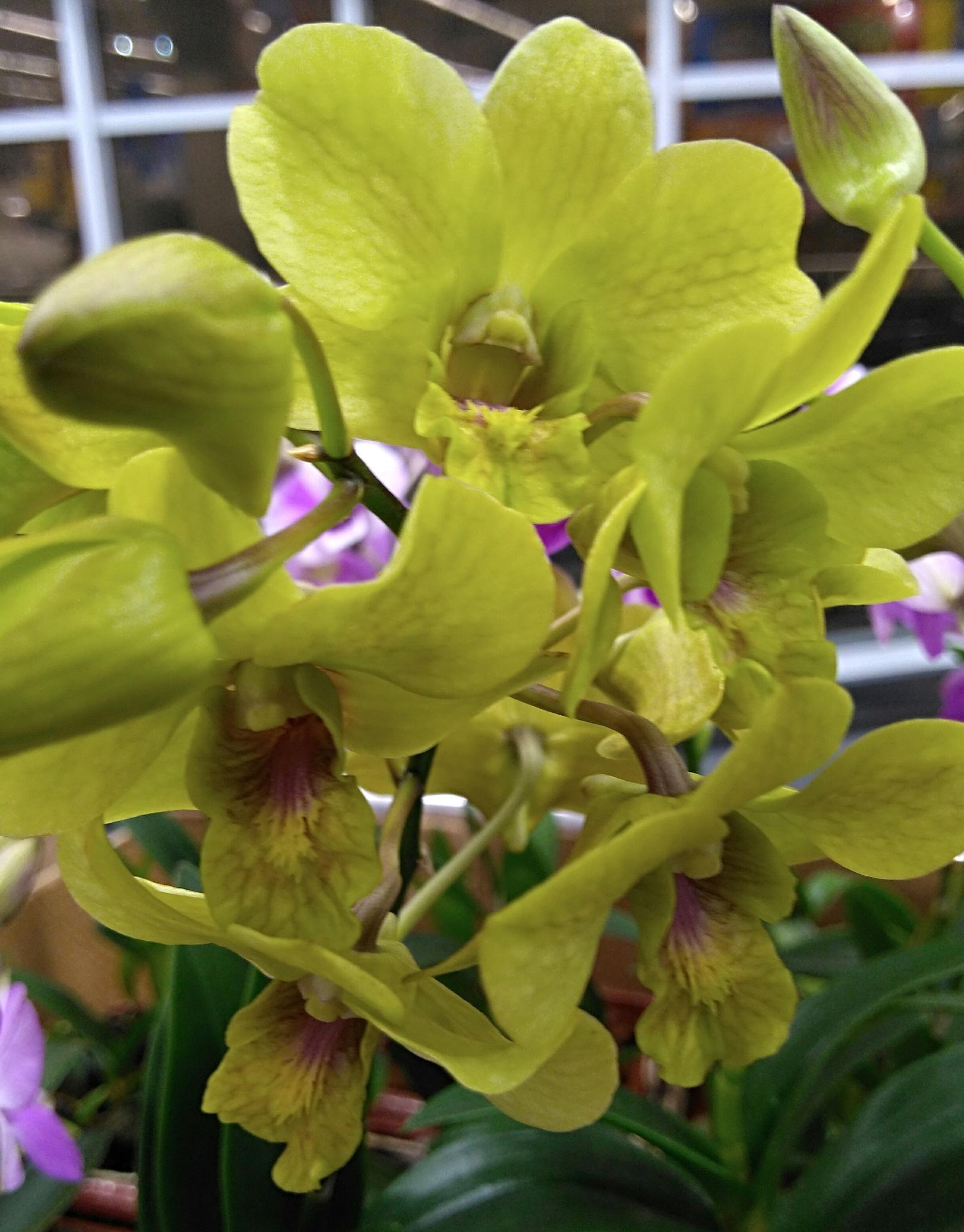 Orquídeas by Sirlei