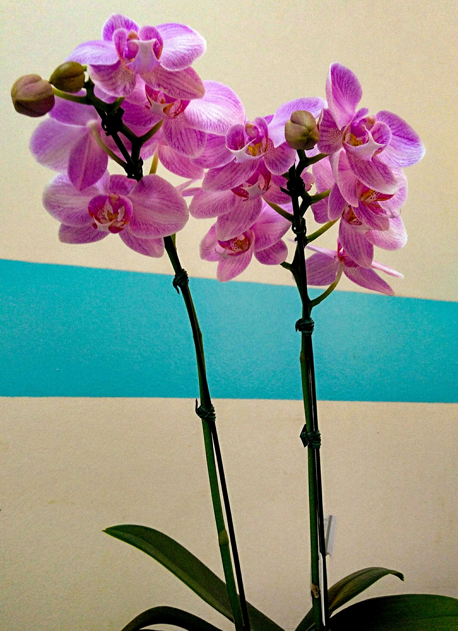 Mini orquídeas. by Sirlei