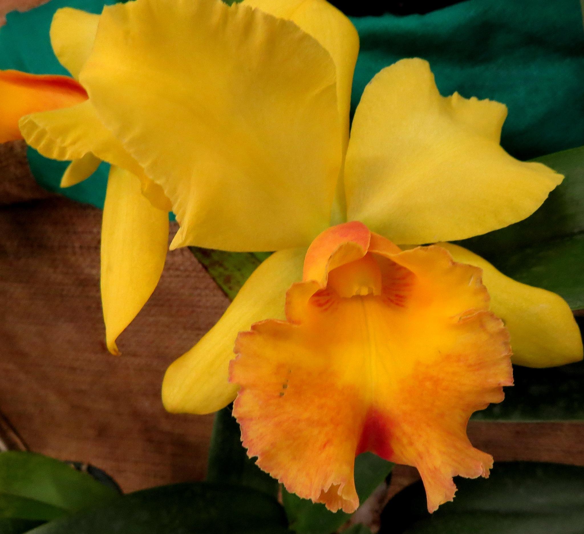 Tesouro amarelo. by Sirlei