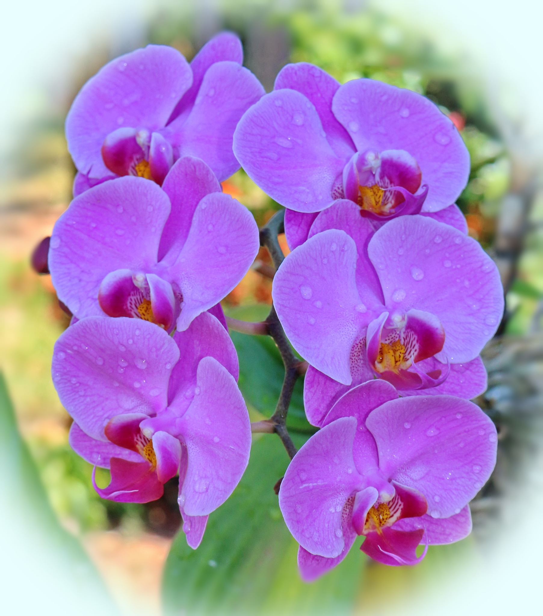 Photo in Nature #natureza #flores #jardim #orquídeas