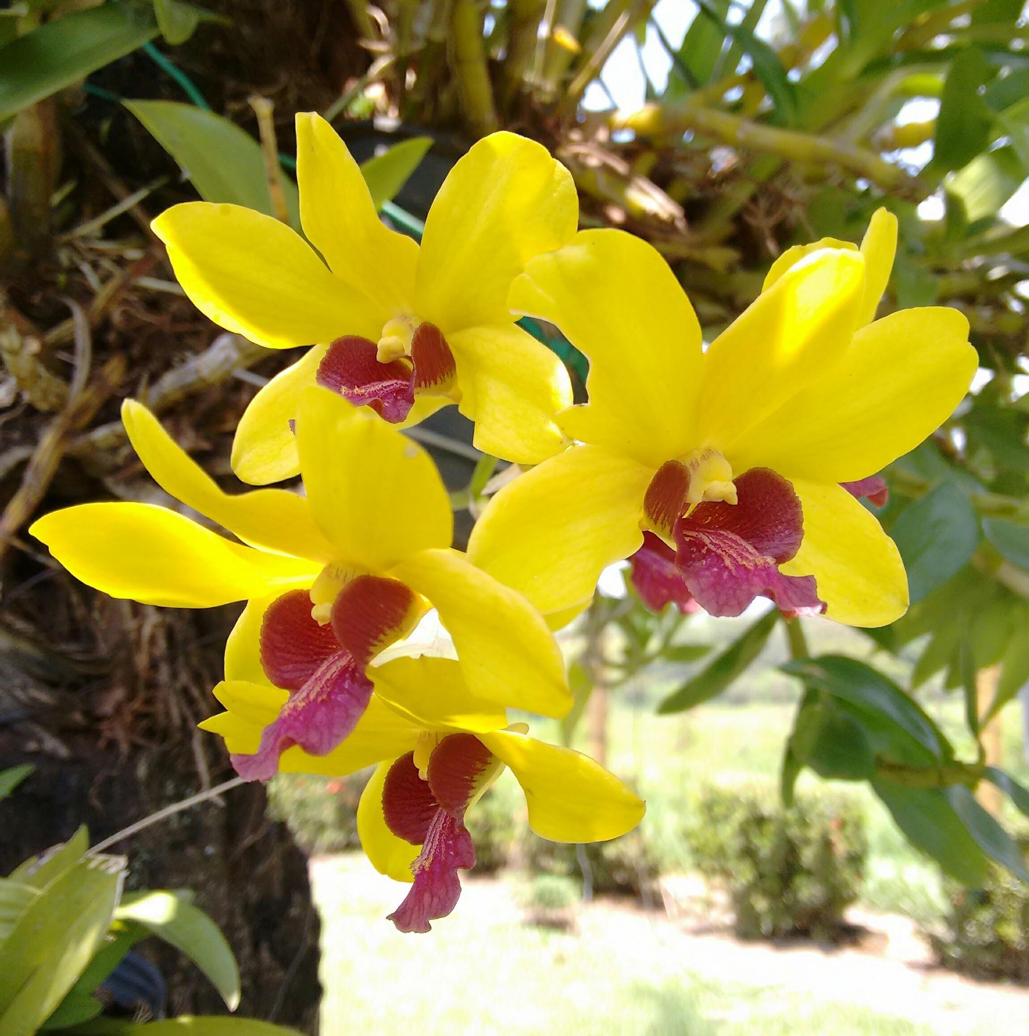 Orquídeas. by Sirlei