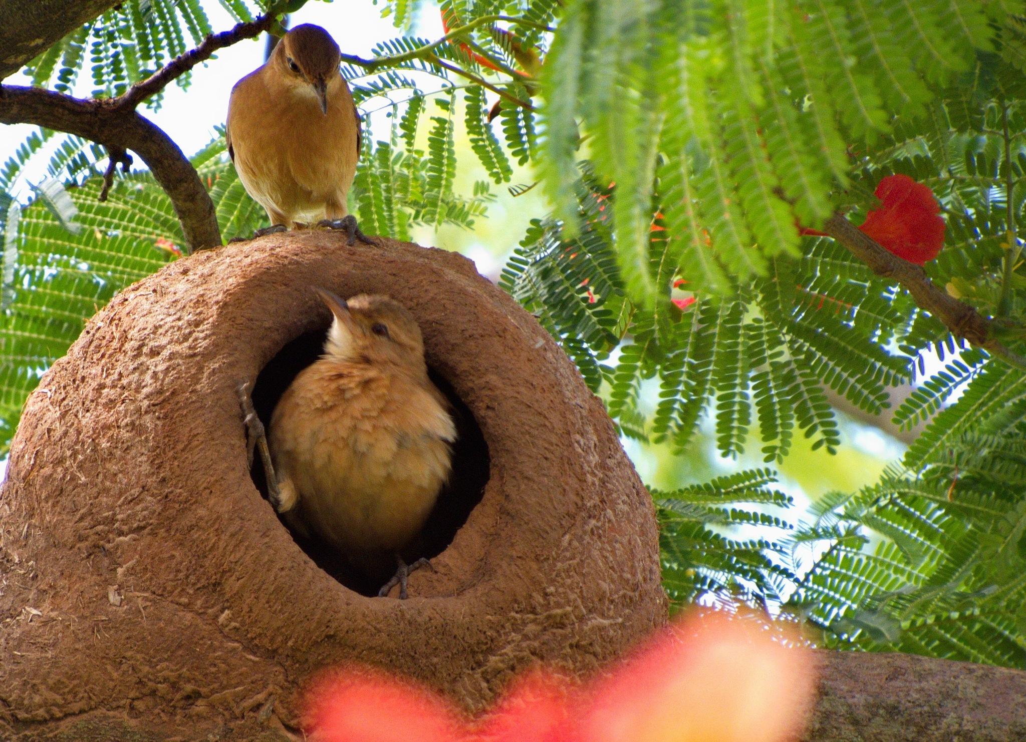 Photo in Nature #natureza #jardim #pássaros