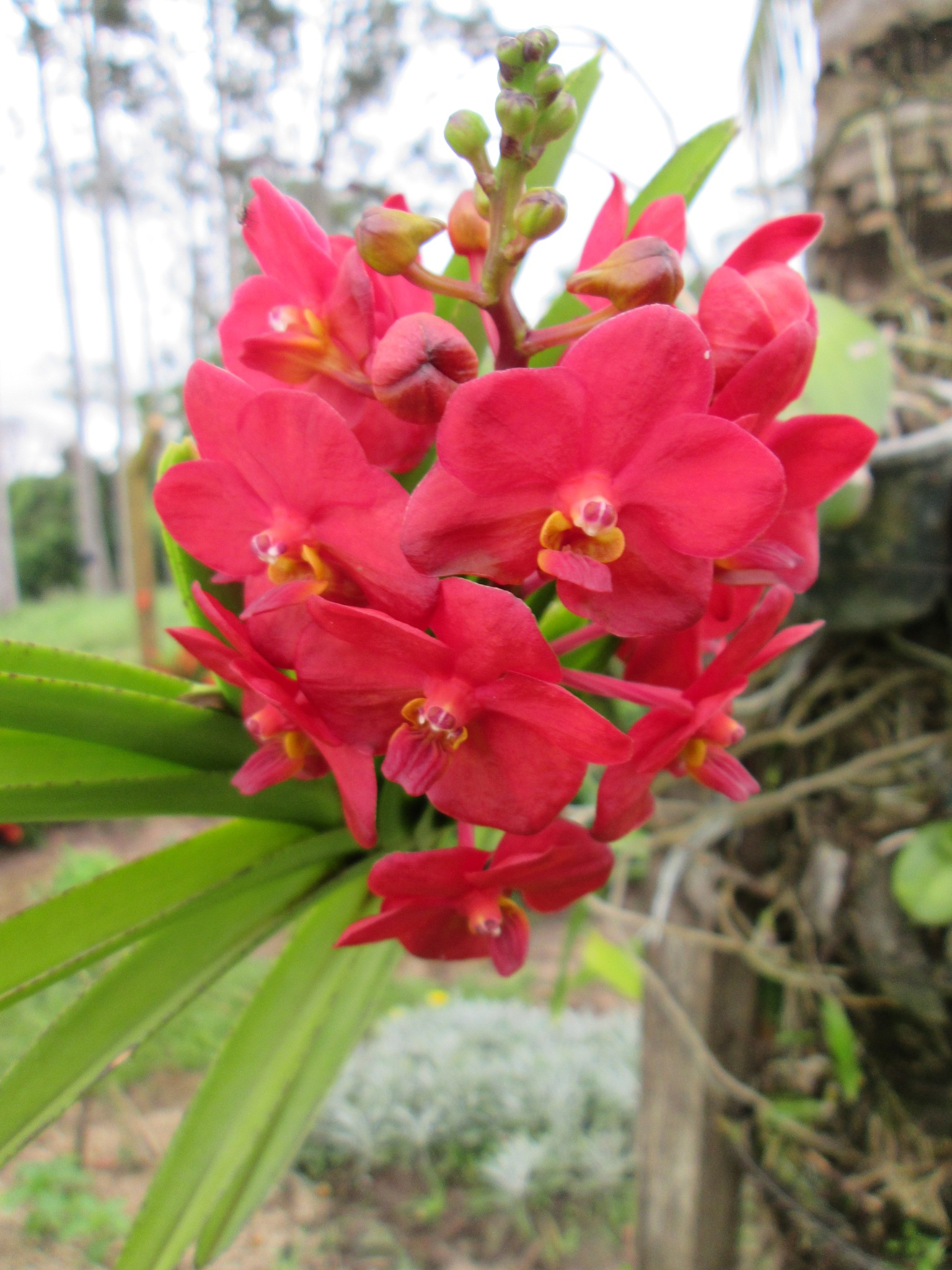 Orquídeas novas by Sirlei