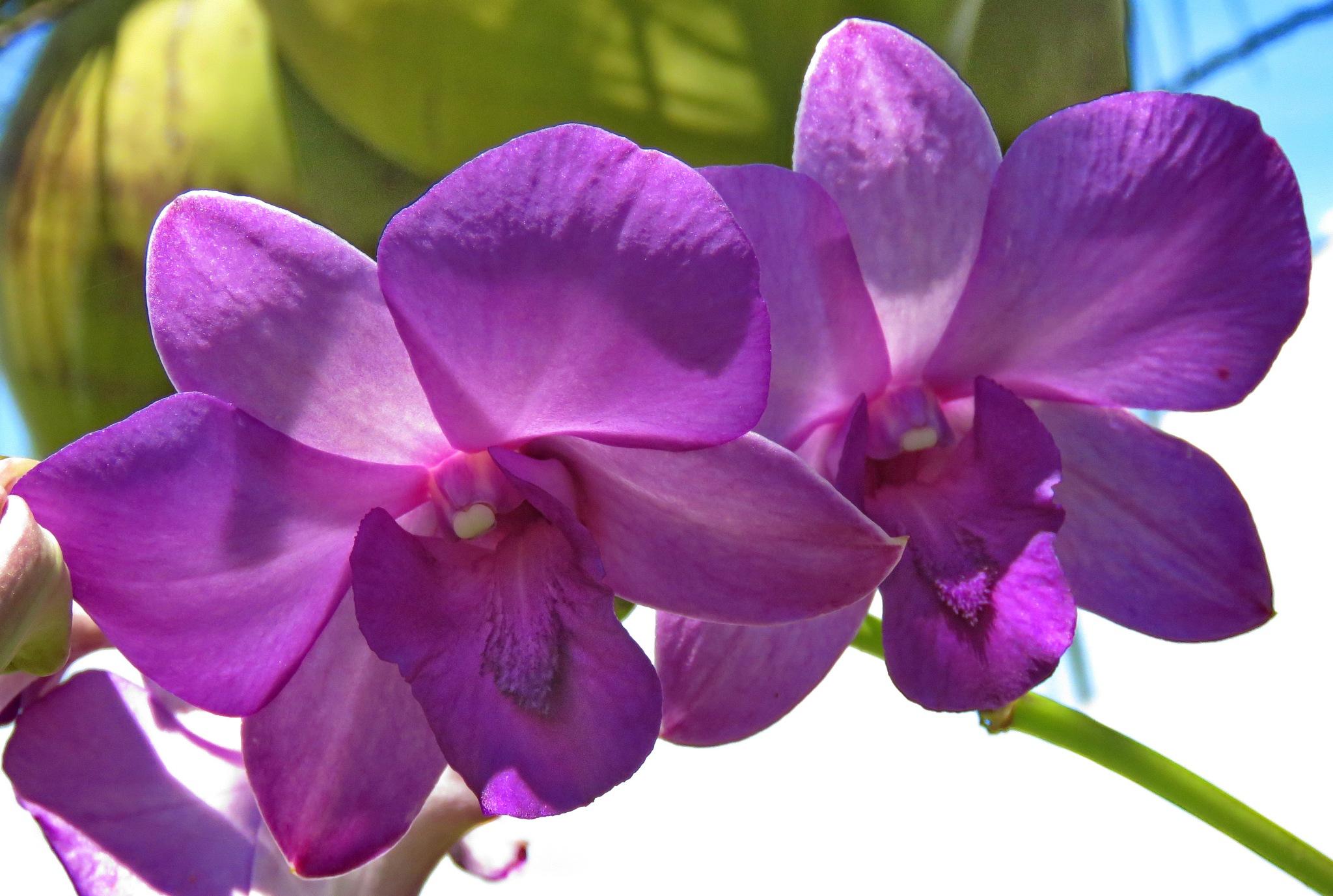 Photo in Nature #flores #jardim #natureza #orquídeas