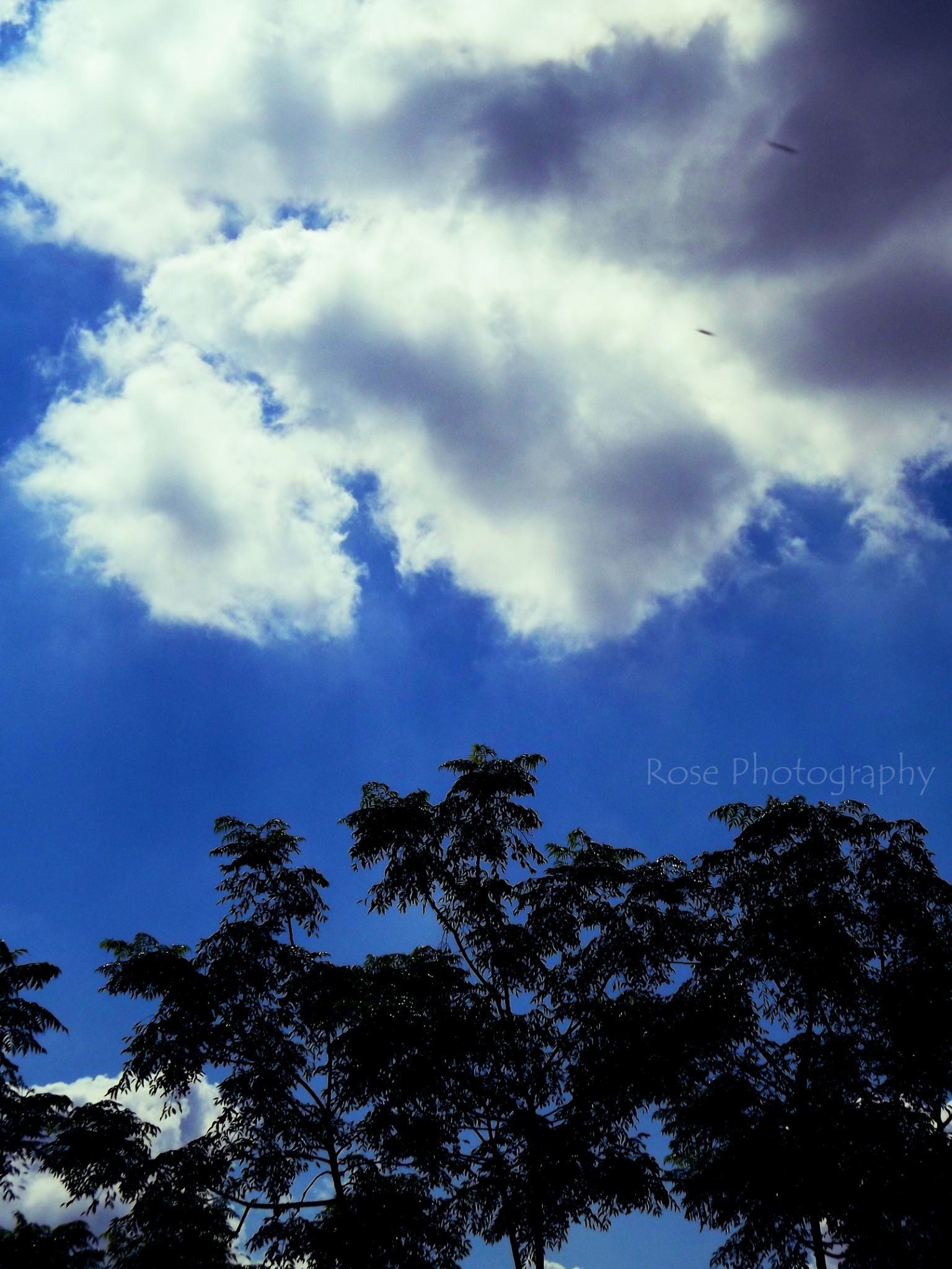 nice day :) by Rosee warda