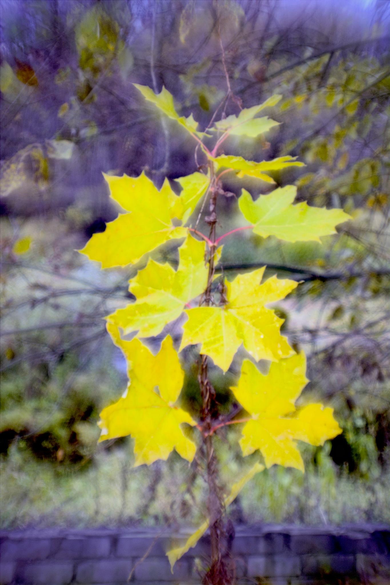 Autumn tree by Herczs Photography