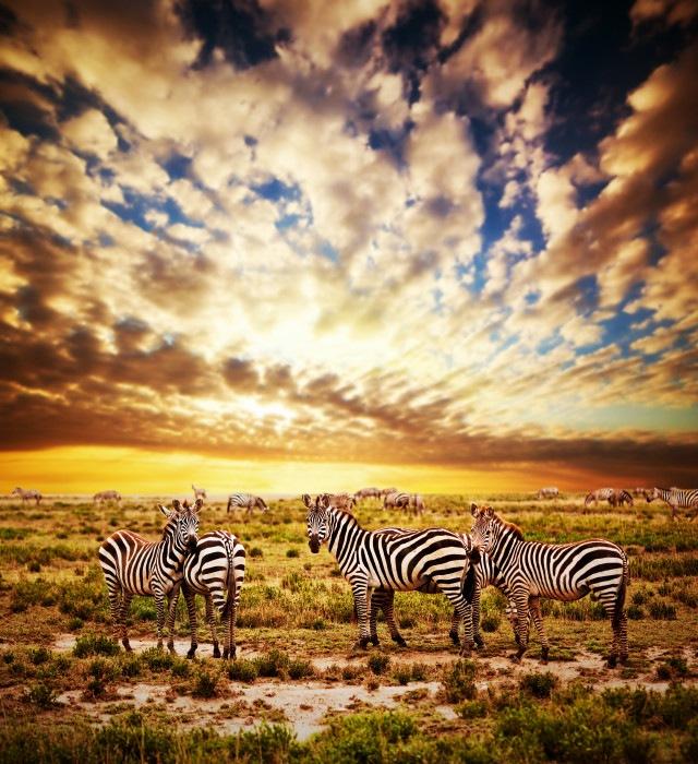 PRIDE OF TANZANIA  by Licious Adventure
