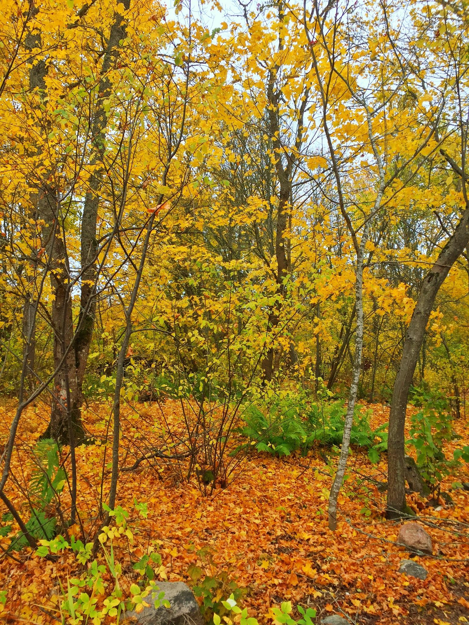 Autumn kravets by Ceciliasderlund