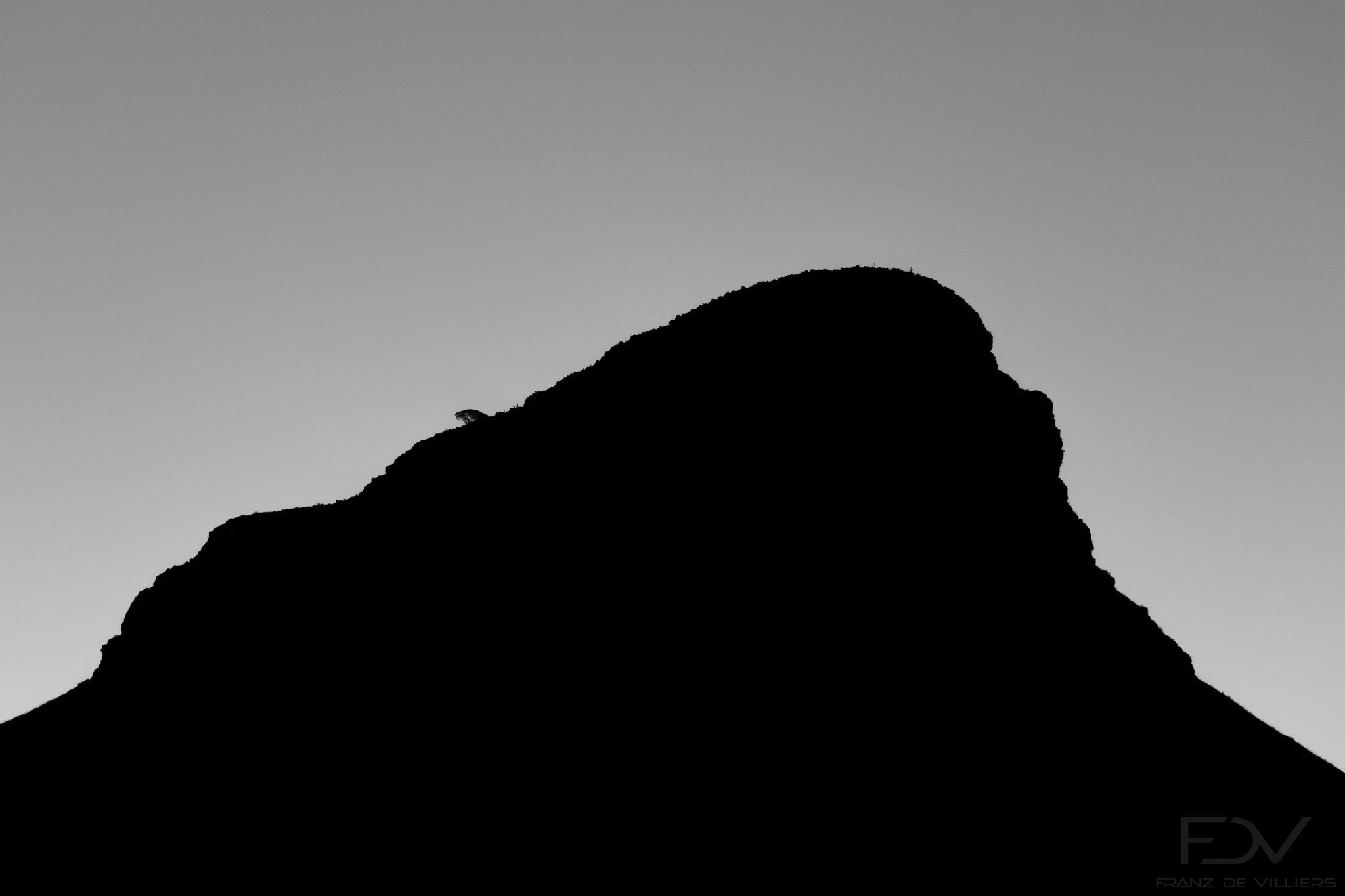 Lion's Head - B&W. by franzdev