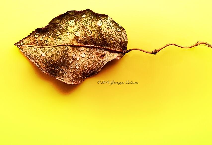 Autumn by Giuseppe Coluccio