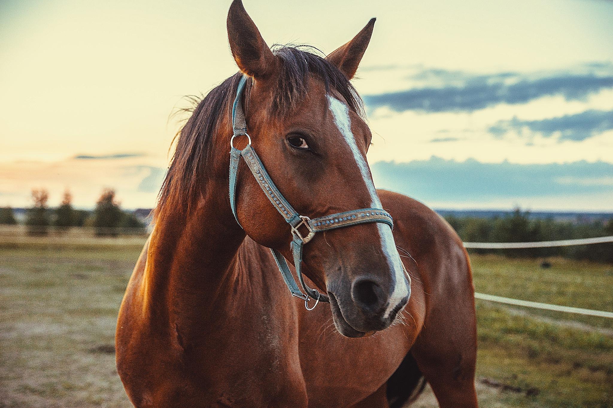 Horse by Daria Klepikova