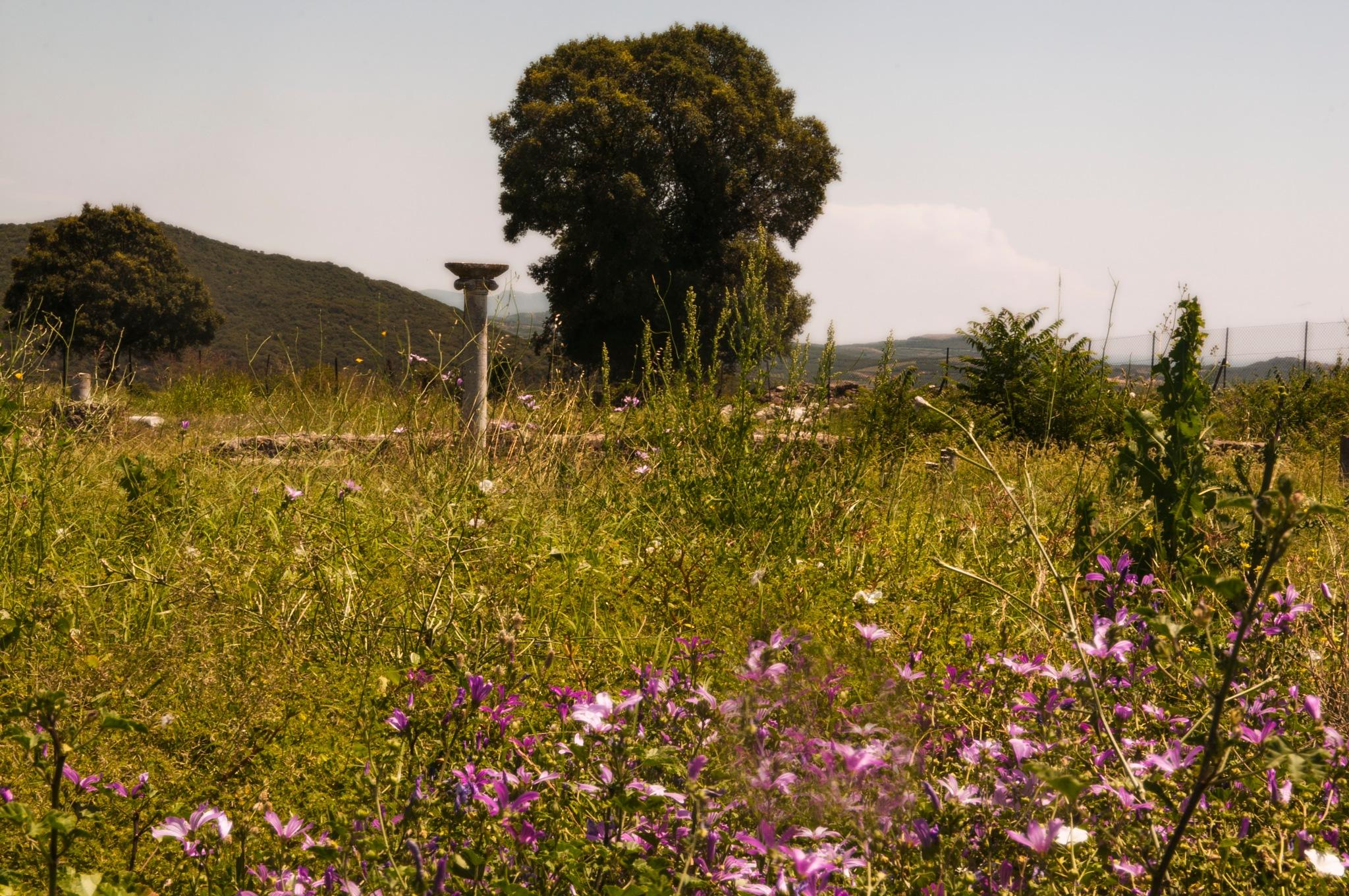 Amfipolis , Greece by Kathrine Anna