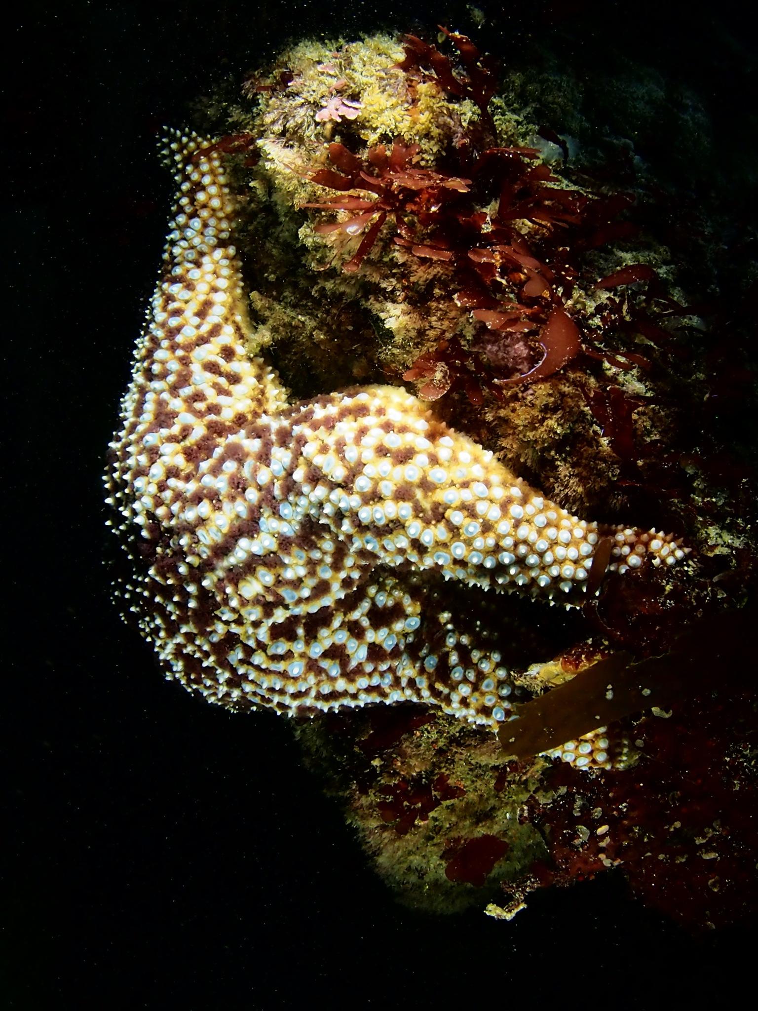 Hiding at depth by s. zimmerhansl