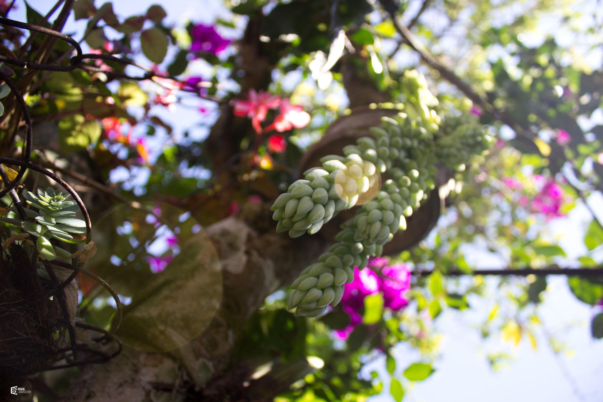 Natural  by 86visuallaboratory