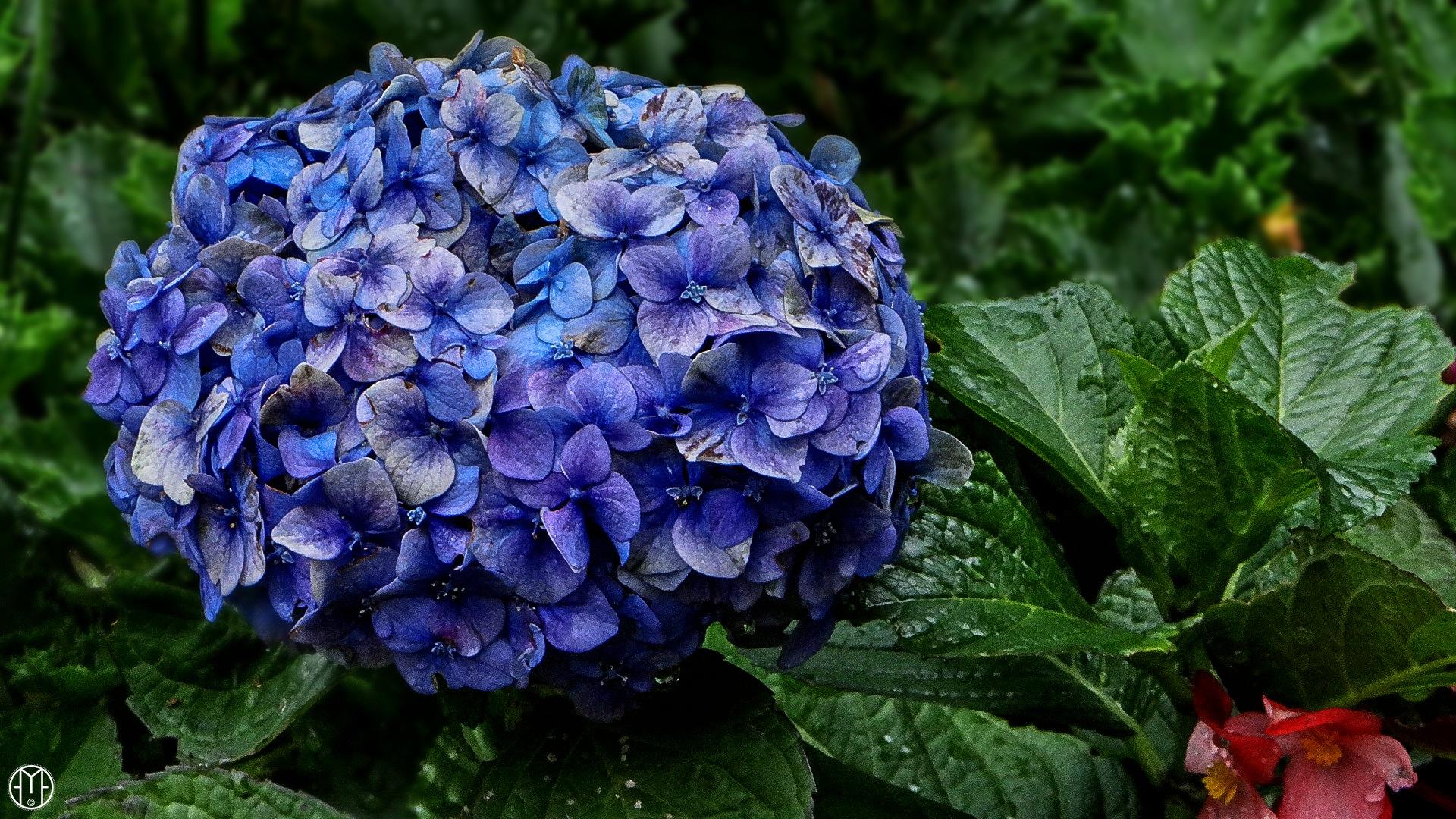 Bouquet - Ramillete by Gabriel Ochoa Rojas