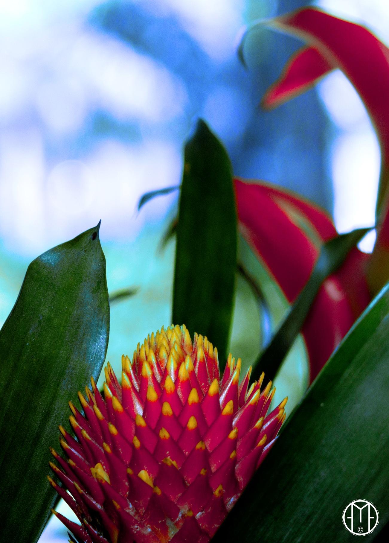 Tropical Flower - Flor Tropical by Gabriel Ochoa Rojas