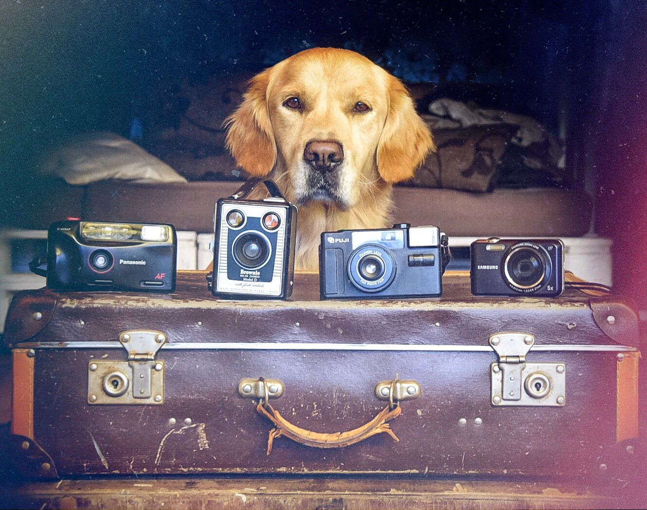 A golden with his cameras by Heidi Salo