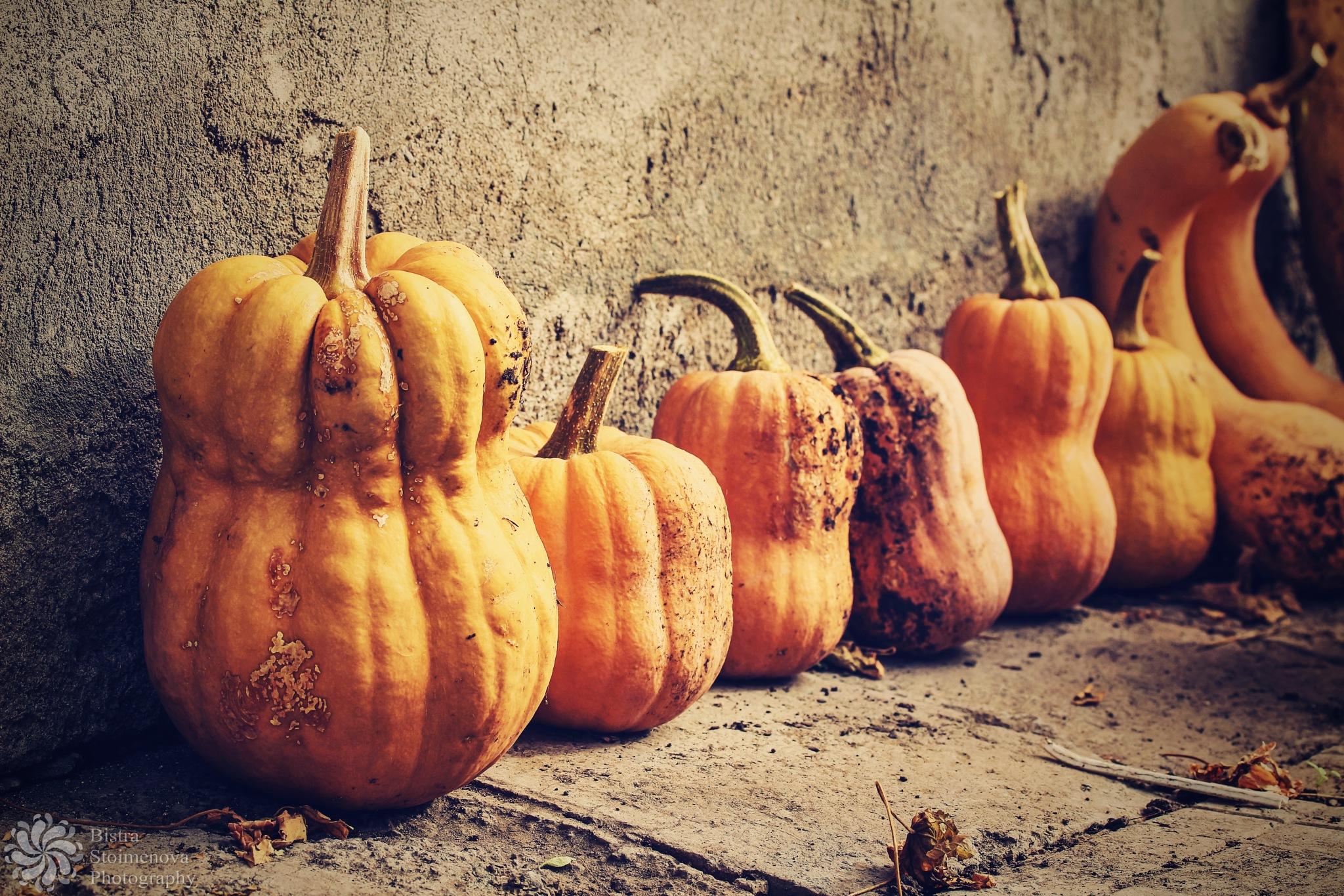 Happy Halloween by Bistra Stoimenova