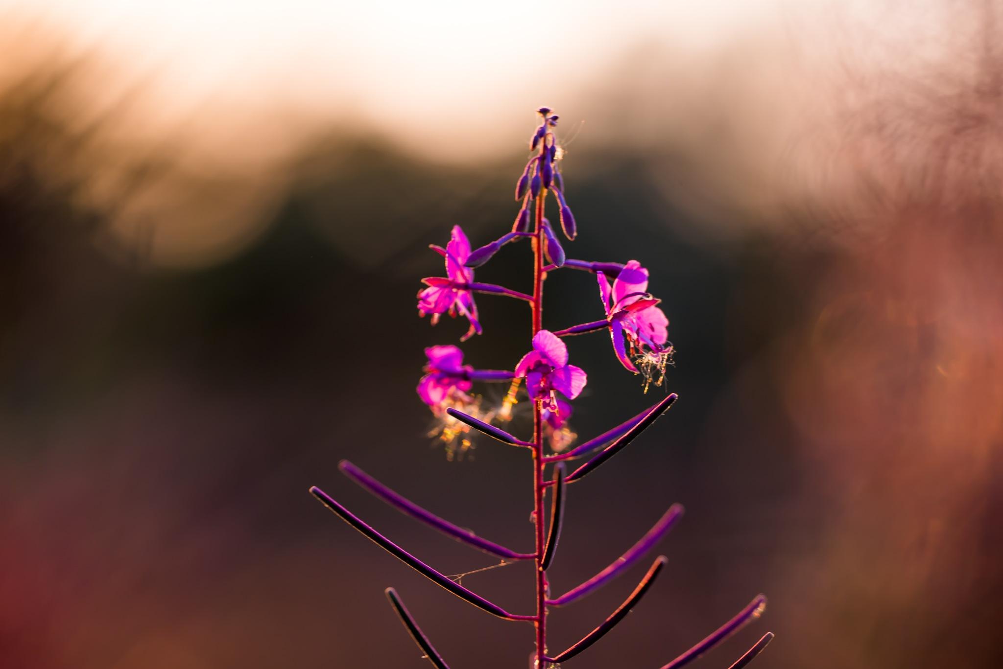 Photo in Macro #purple #macro #flower