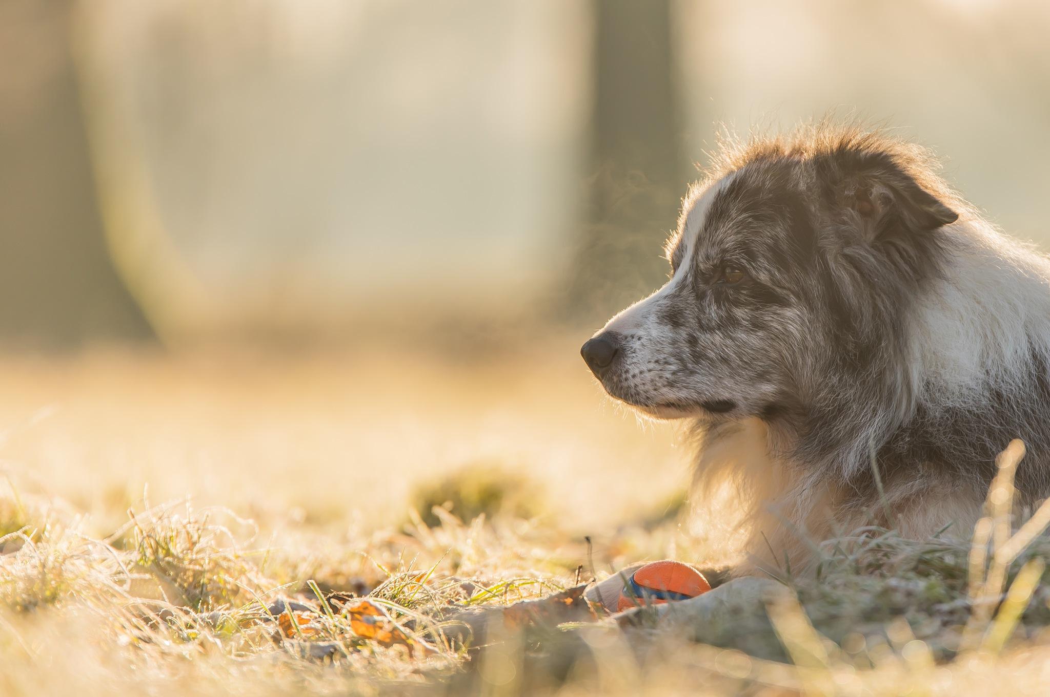 Happy dog by Gilbert de Bruijn
