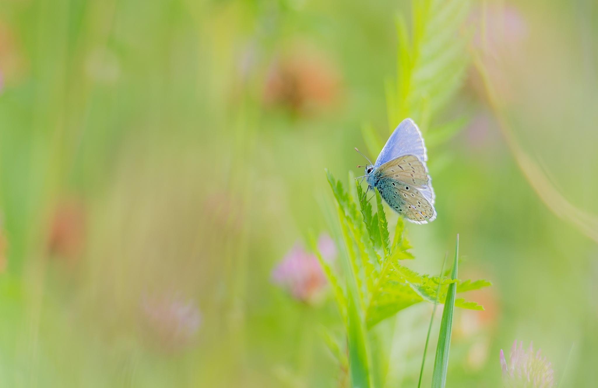 Lovely blue by Gilbert de Bruijn