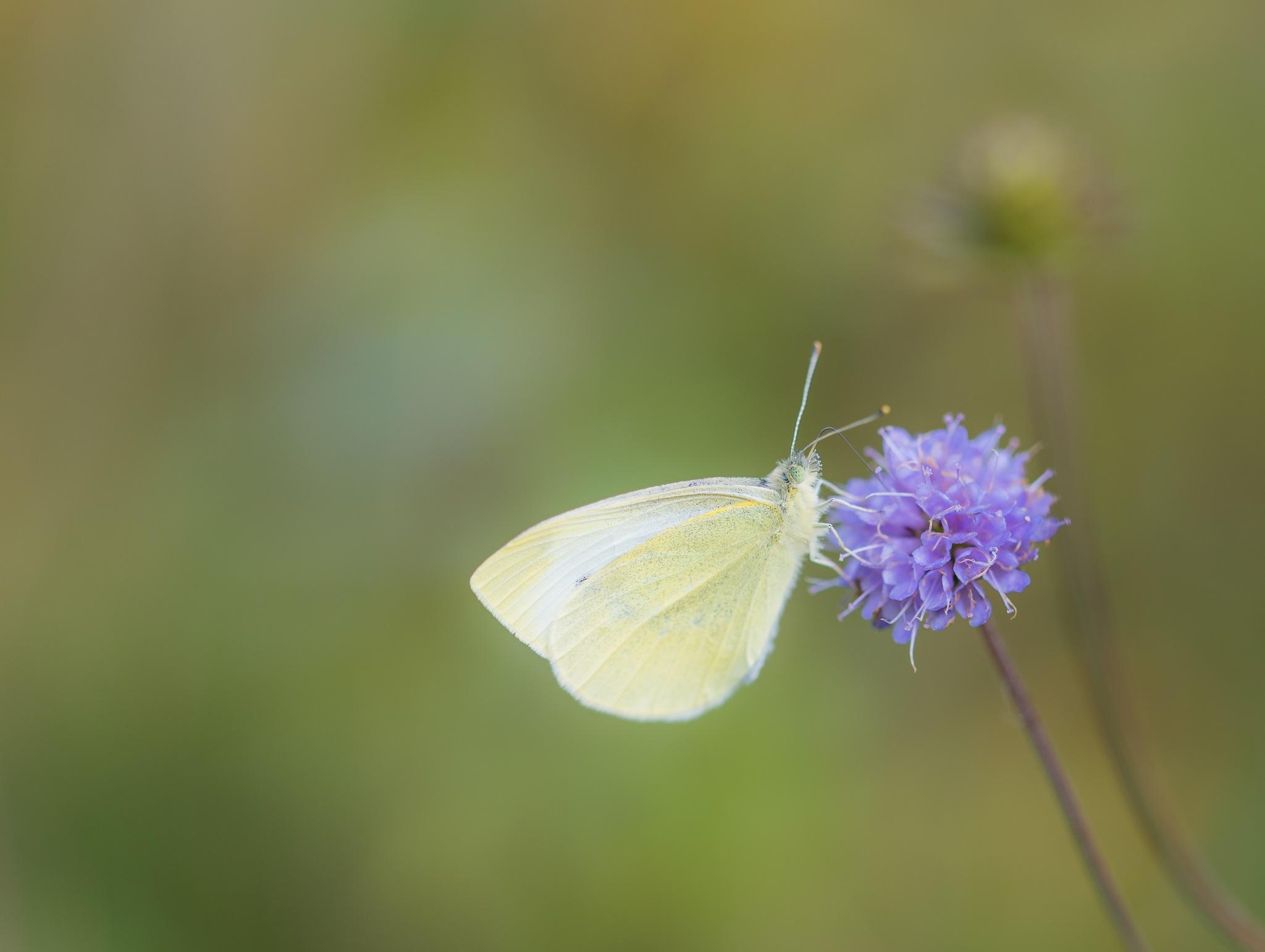 Fresh white in October by Gilbert de Bruijn