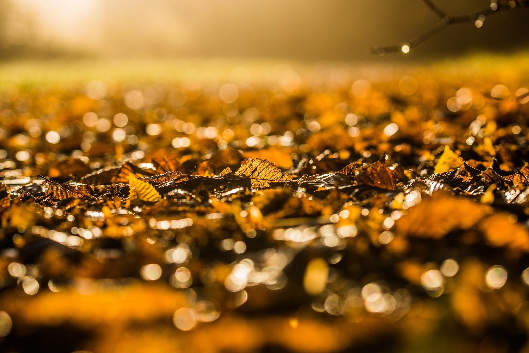 Yep, it is autumn by Gilbert de Bruijn