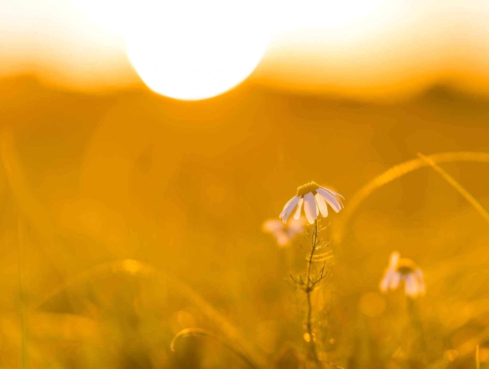 With the sun the flowers set as well by Gilbert de Bruijn