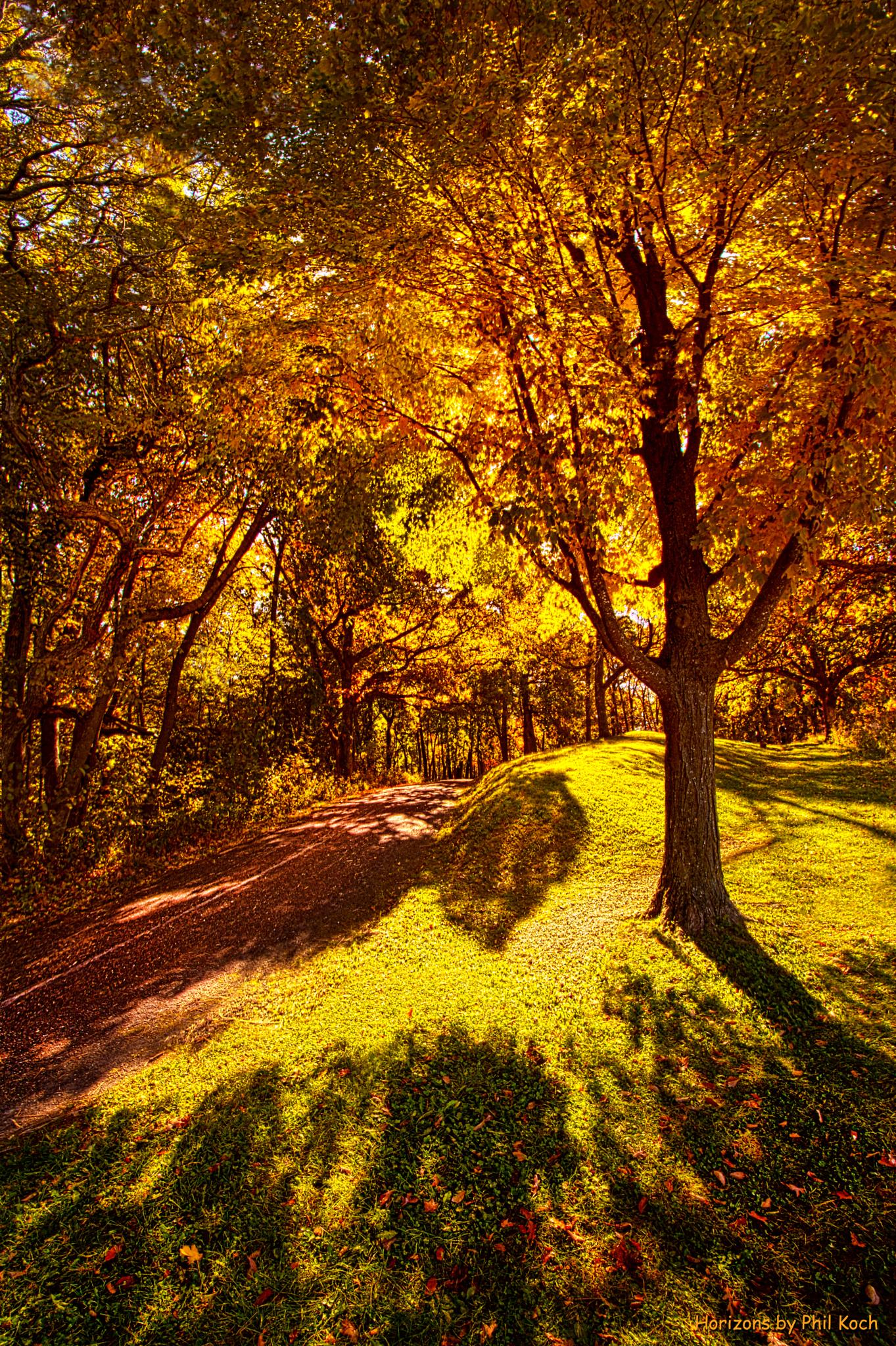 Fall Colors by PhilKoch