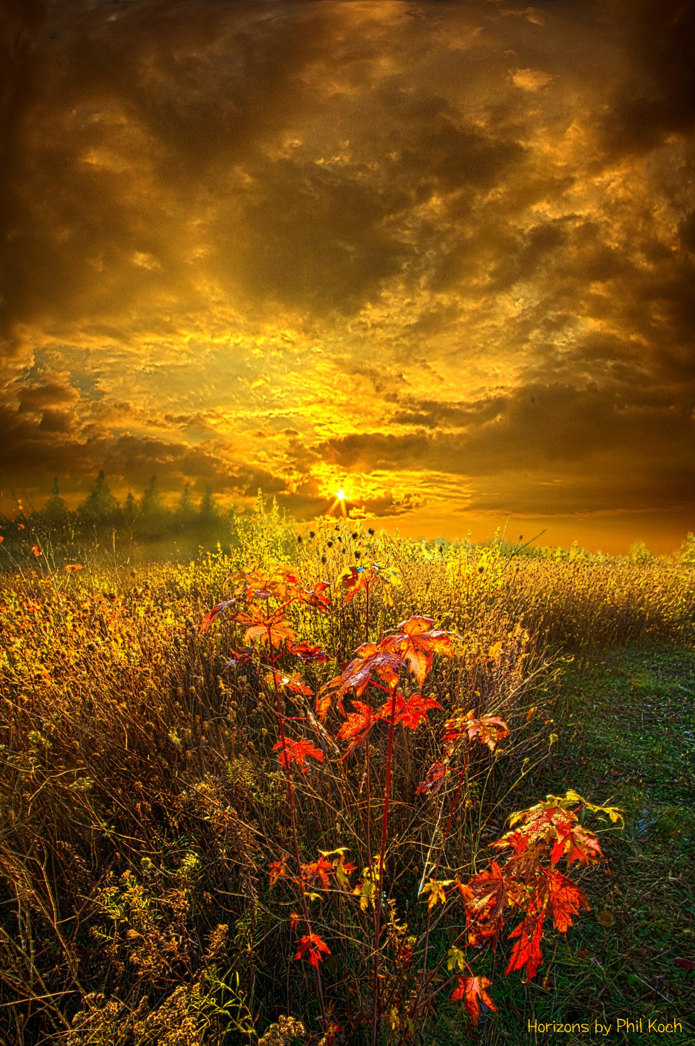 Shine Your Light by PhilKoch