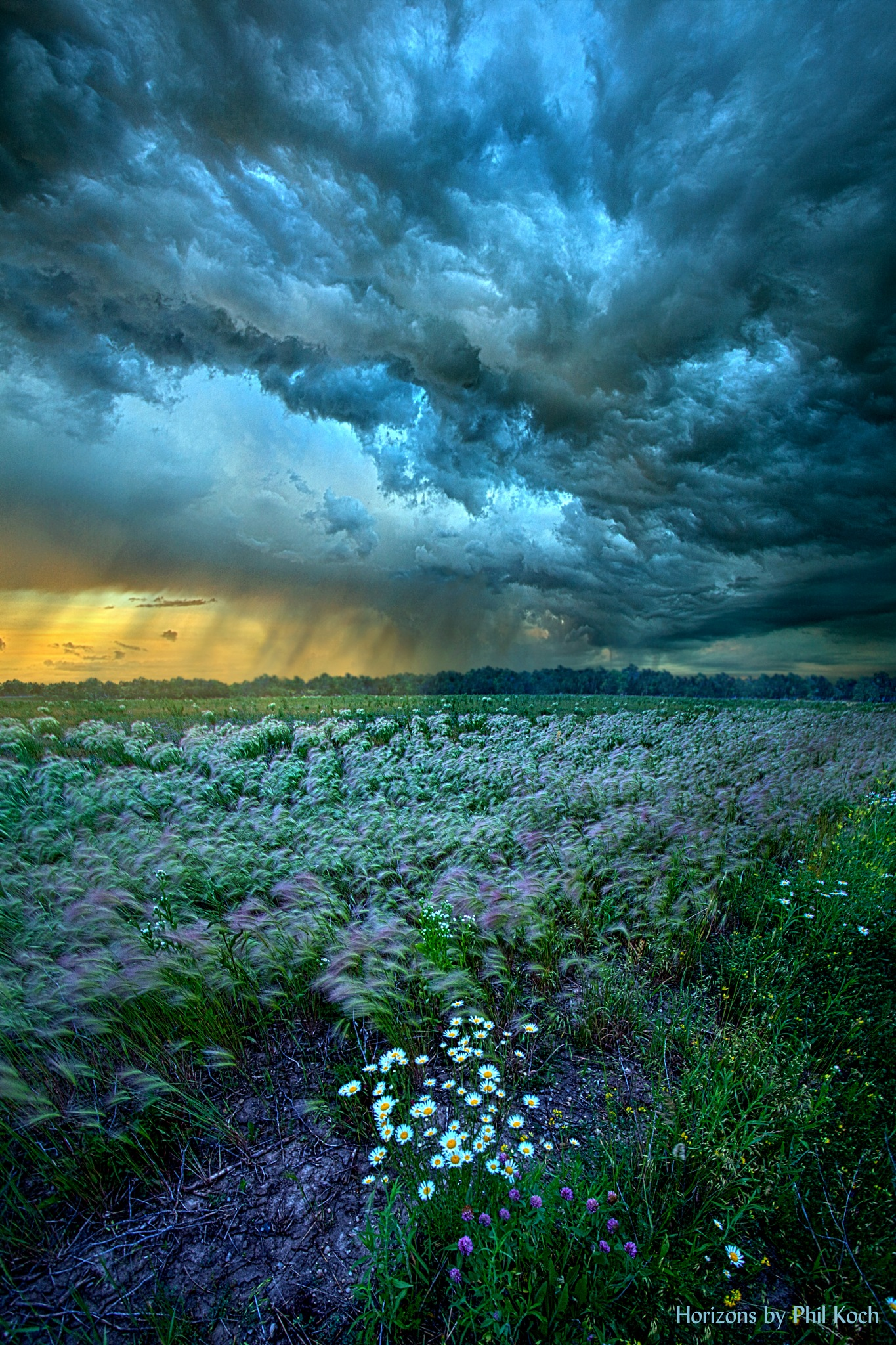 Thy Will Be Done by PhilKoch