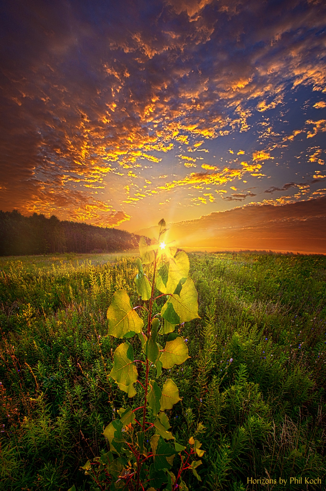 Where Nothing Else Matters by PhilKoch