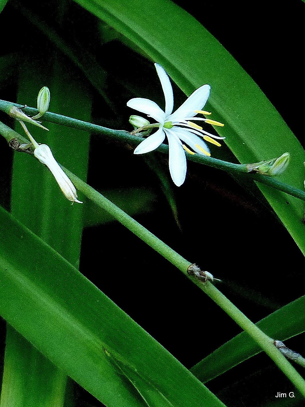 White Bloom by Jim Graham