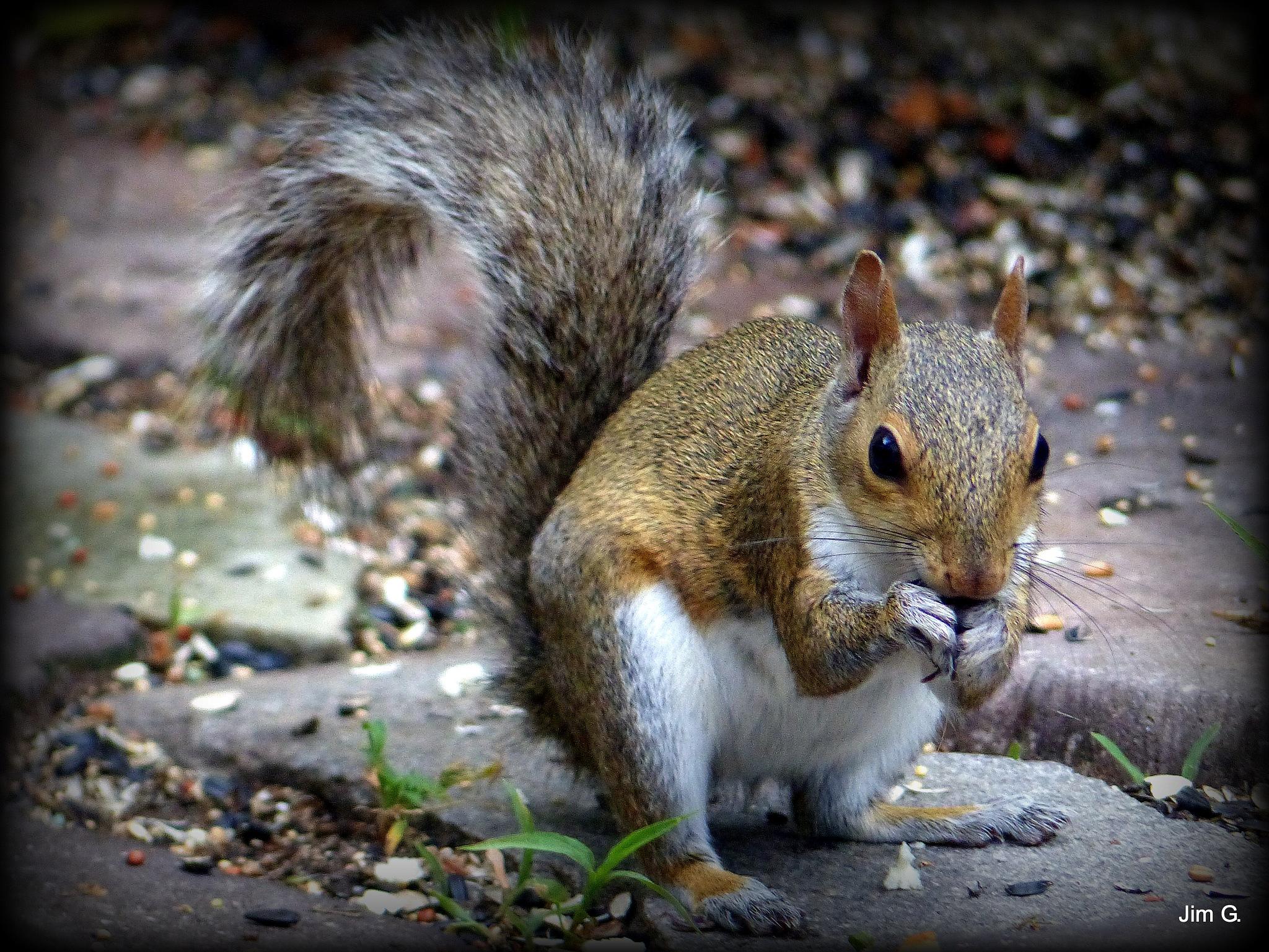 Squirrel Feeding by Jim Graham