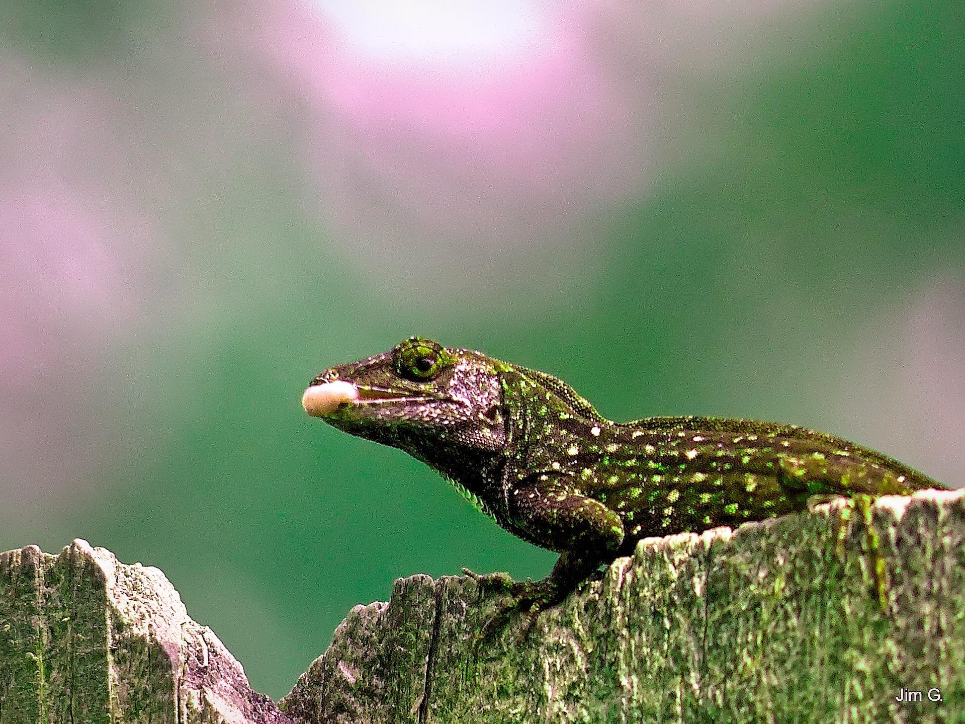 HDR Edit of Lizard by Jim Graham