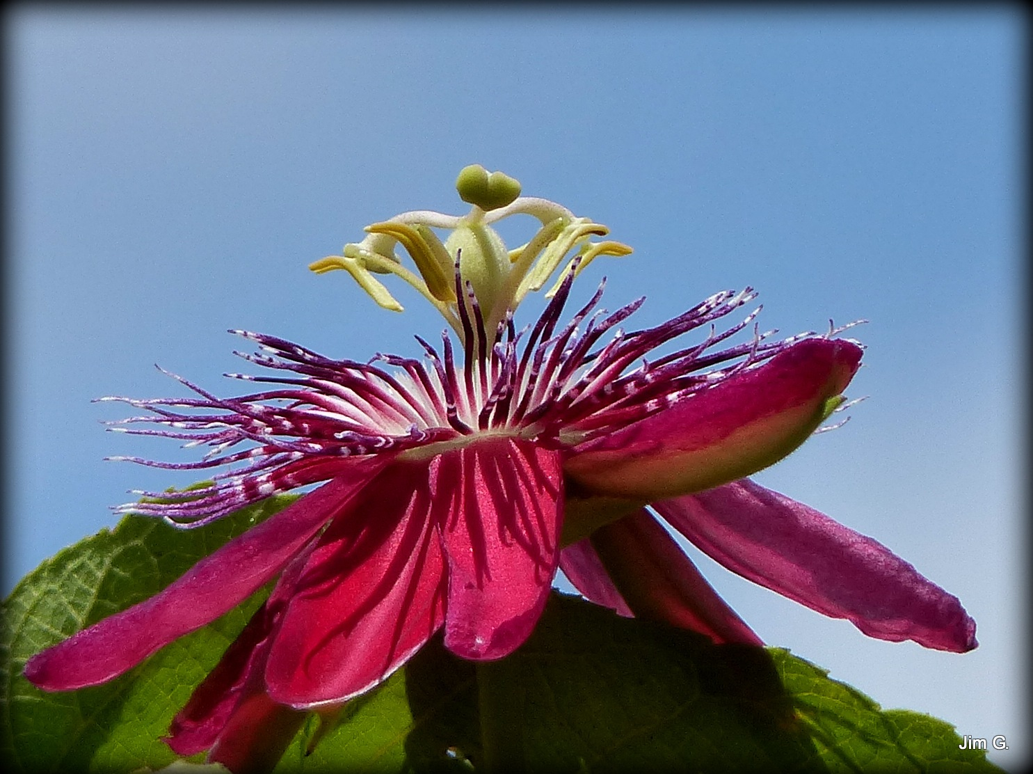 Passion Flower by Jim Graham