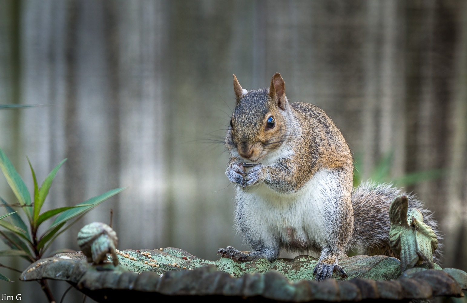 Squirrel eating sunflower seeds by Jim Graham