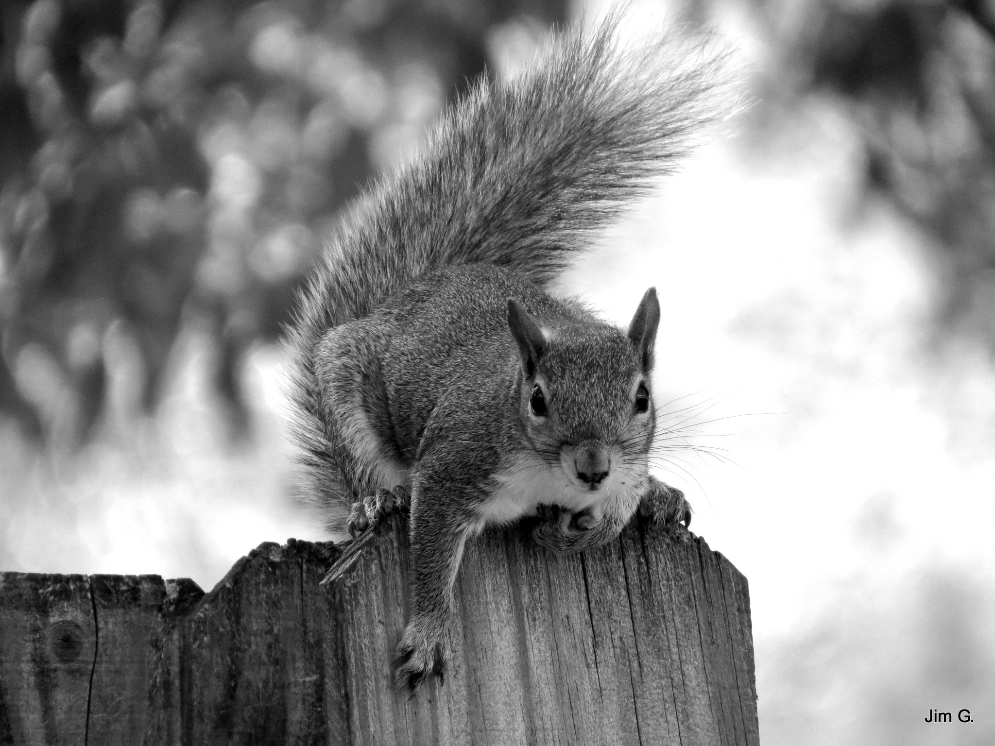 Squirrel Begging for food by Jim Graham