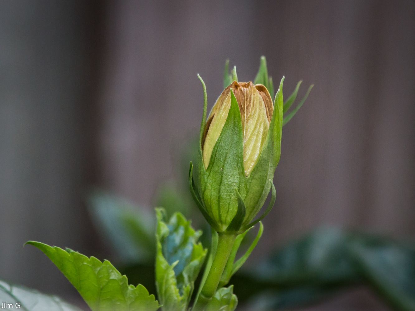 Bud Macro by Jim Graham