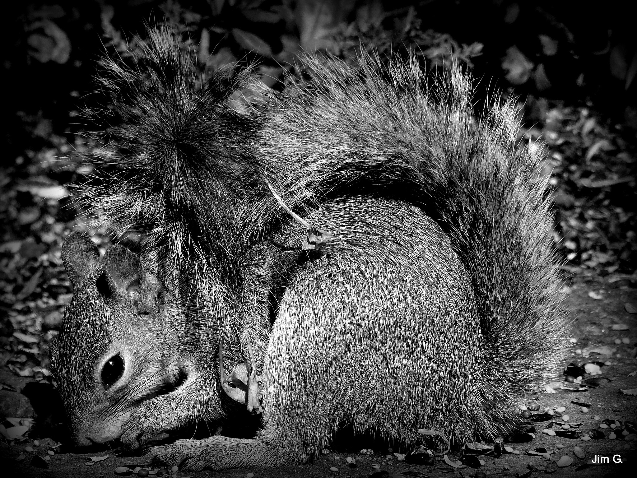Squirrel in Black and White by Jim Graham